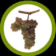 variedad uva txakoli Bilbao